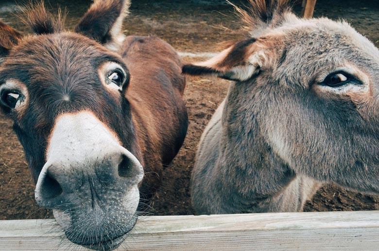 Journée de l'âne