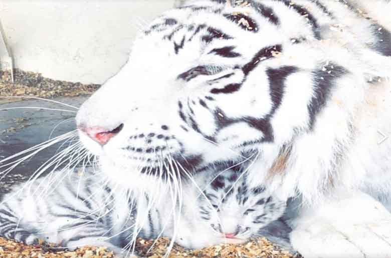 ROAAR, parc animalier de la Sainte Victoire